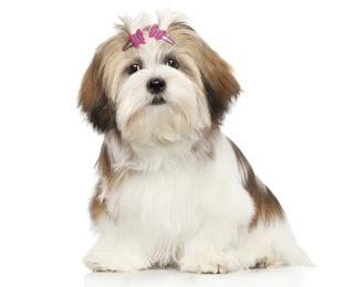 good-dog-owner.jpg