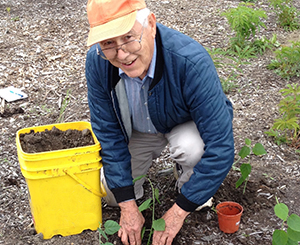 Older man planting flowers in the dirt