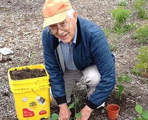 Kendal at Oberlin resident volunteer gardening.