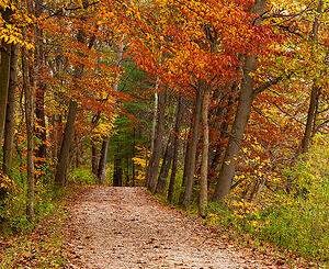 trail going through ohio fall foliage