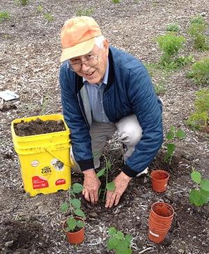 Older man giving his time gardening
