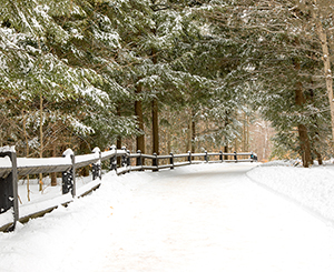Michigan road with pine trees covered in beautiful snow